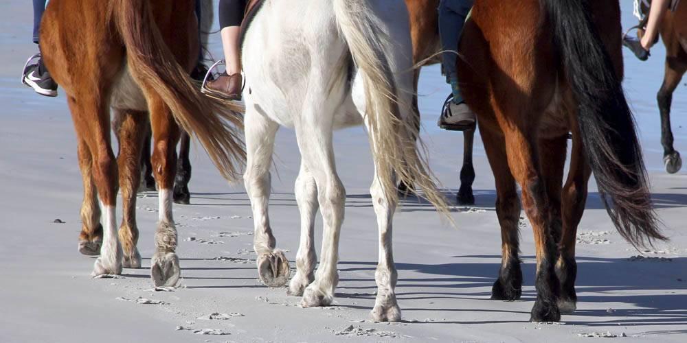Gansbaai and Pearly Beach Horse Trails
